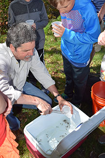 teacher using tongs to take baby salmon out of a cooler